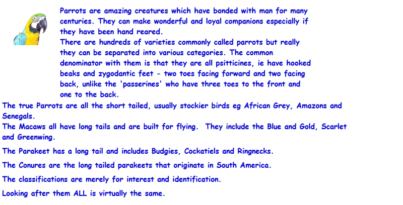 Birds & Parrots